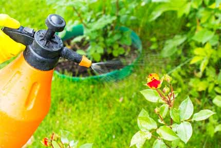 best garden sprayer 2018